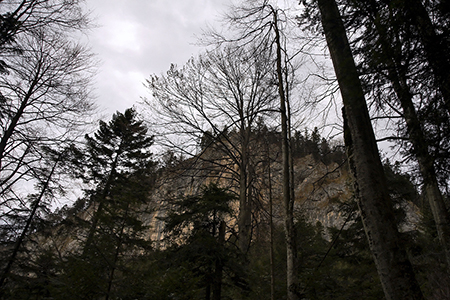 High rocky mountain wall with tree covered ridge